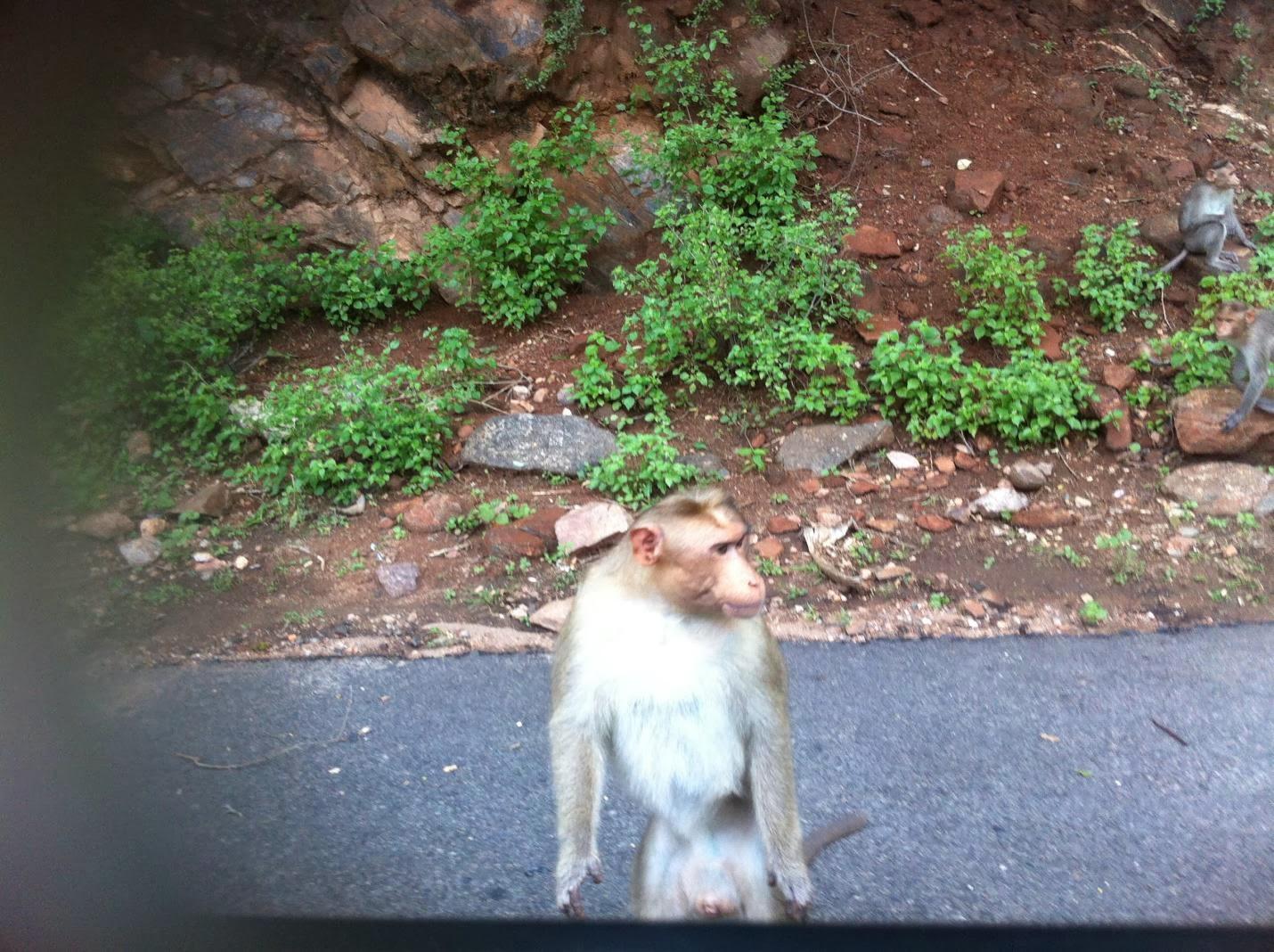 Image result for city monkeys gang leader
