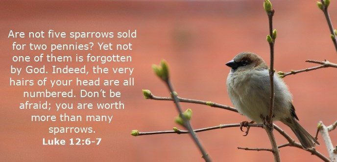 Are not five sparrows sold for two pennies? Yet not one of them is forgotten by God. Indeed, the very hairs of your head are all numbered. Don't be afraid; you are worth more than many sparrows.