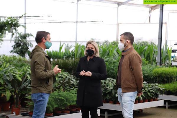 Agricultura abona casi un millón de euros para compensar los daños de la pandemia en el sector de la flor cortada