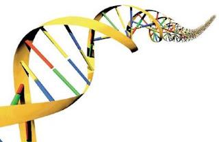 Istilah-istilah dalam Ilmu Genetika