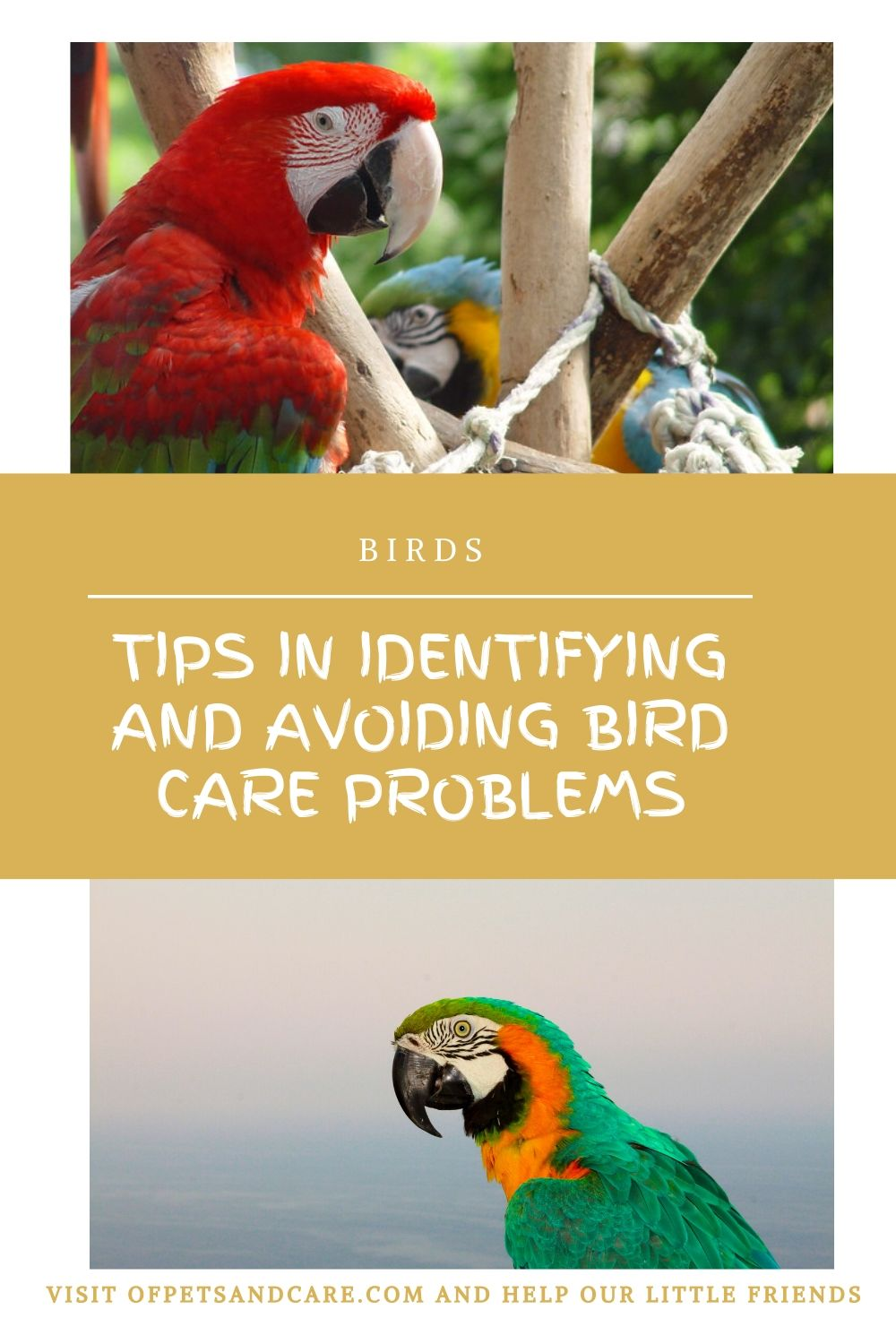 Tips in Identifying and Avoiding Bird Care Problems,