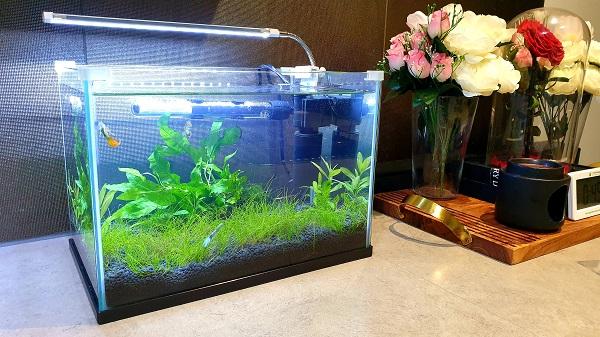 Setting up a planted Guppy aquarium