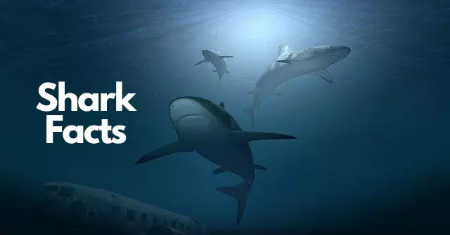 120 Shocking Facts About Shark In Hindi