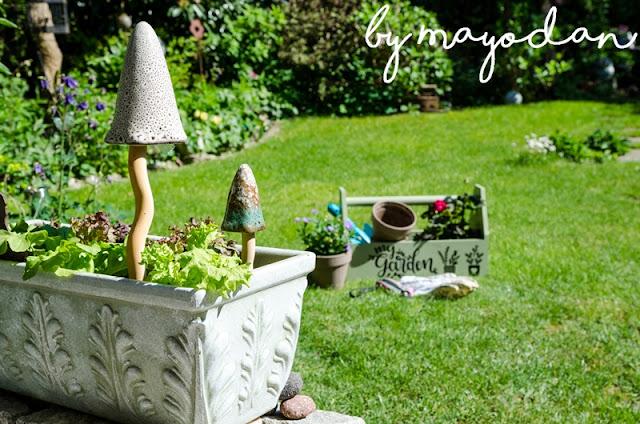 Salatpflanzen im Blumenkasten