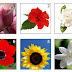 الوردة التي تختارينها تكشف لكى ما لا يخطر على البال