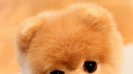 cute puppy mobile wallpaper