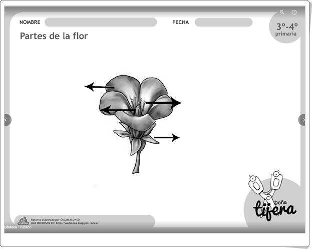 """""""Partes de la flor"""" (Fichas recortables de Ciencias Naturales de Primaria)"""
