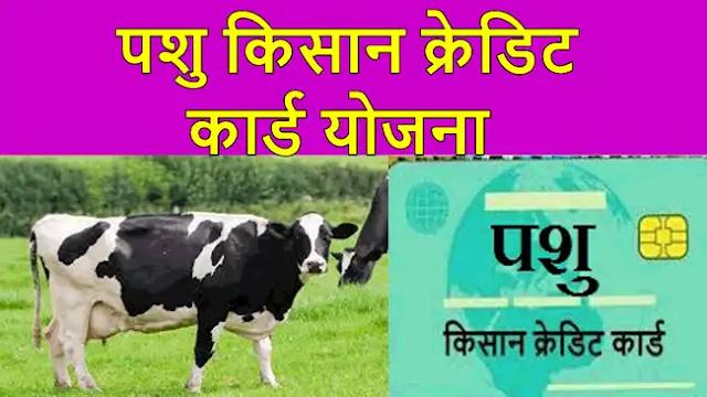 Animal Farmers Credit Card (Pashu Kisan Credit Card Yojana) 2021 Online Application- Documents, Benefits, Application Forms