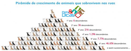 Esquema do crescimento populacional de animais que vivem nas ruas