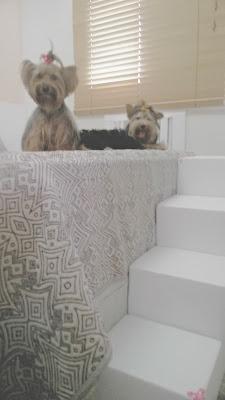 escadas estáveis para cães