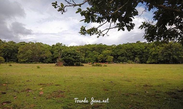 padang cidaon merupakan area berkumpul dan makan satwa liar taman nasional ujung kulon