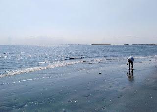 検見川浜の様子。天気も上々、陽光を受けて海もキラキラ光っています。