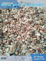 batu koral sikat putih multycolor