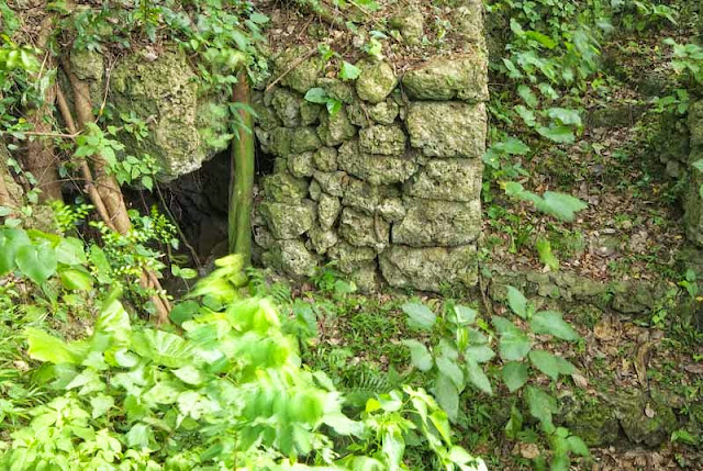 cave, Itoman, vegetation