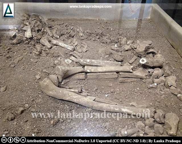 Human skeleton from Potana (near Sigiriya)