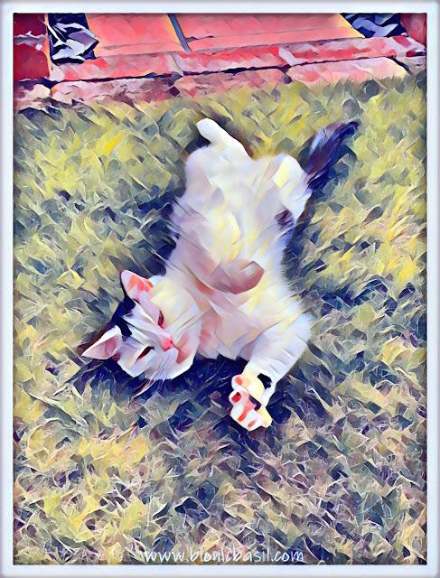 Smooch's Big Sunday Stretch ©BionicBasil® Caturday Art