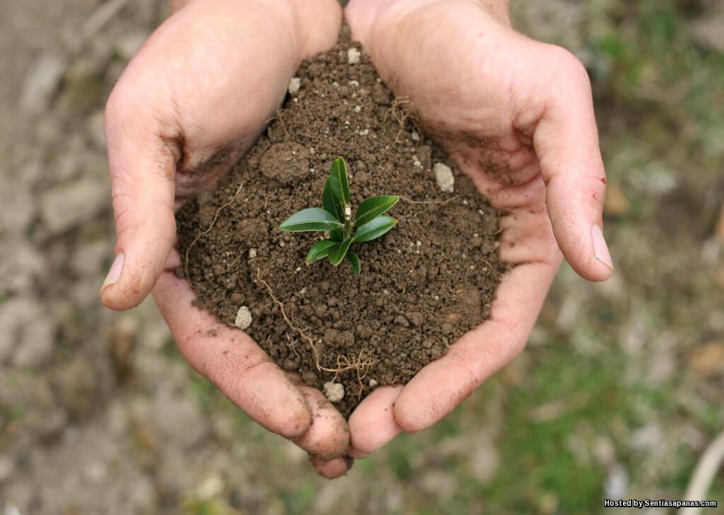 Fakta Tentang Manfaat Tanah