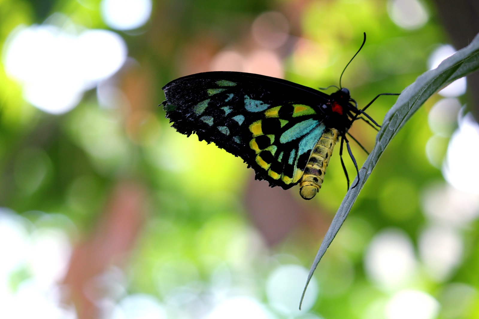nature-colorful-insect-butterfly-images