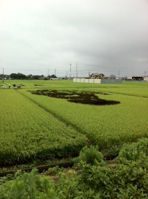こしがや田んぼアート2011ゲゲゲの鬼太郎(8/21)