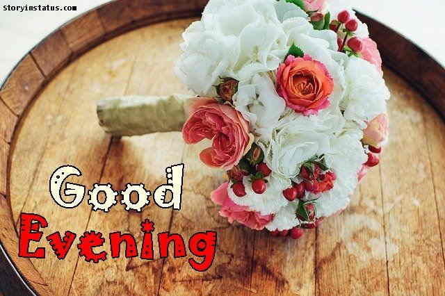 good evening rose flower