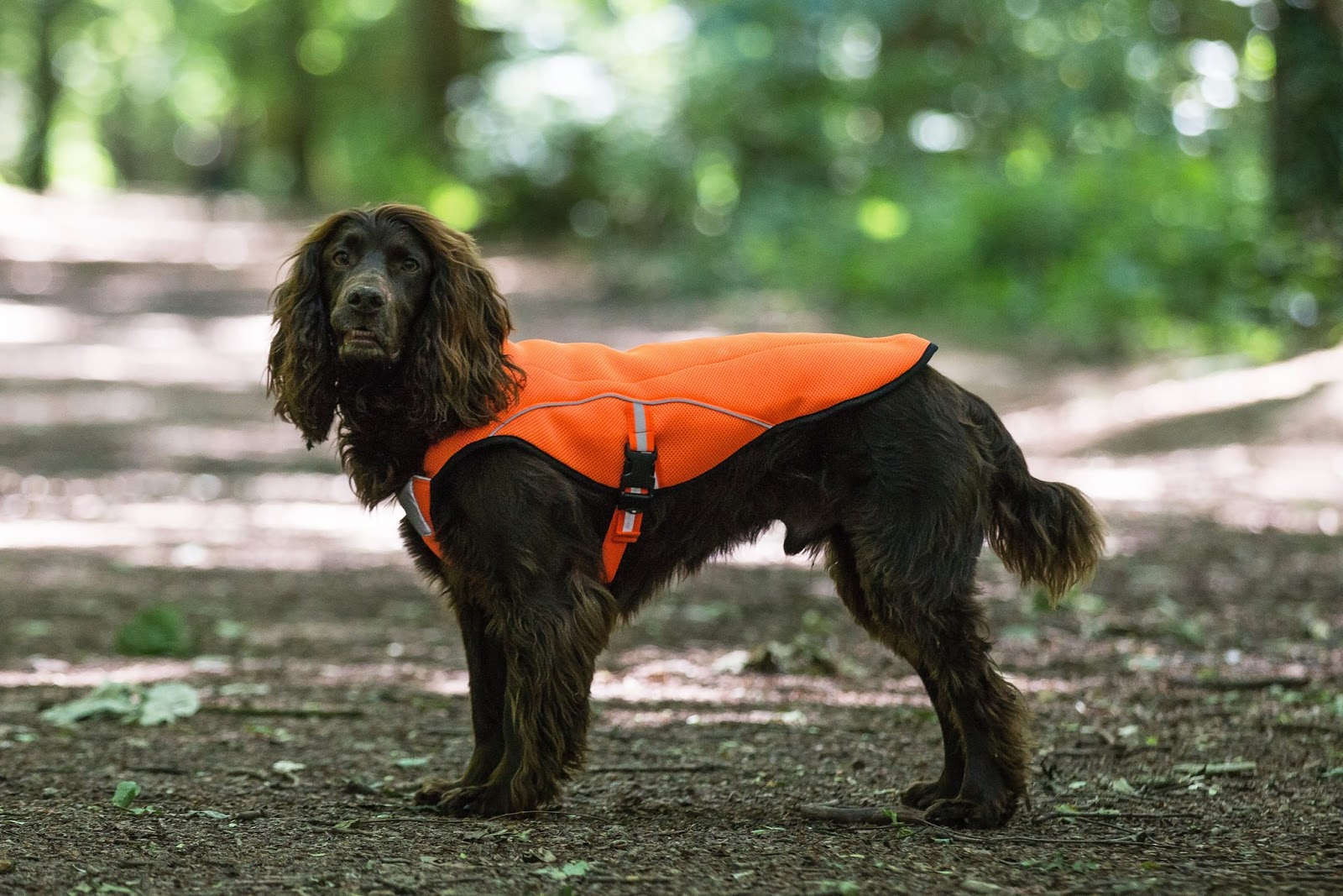 Dog Hi-Vis Jacket