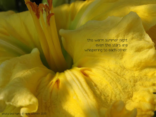 DAYLILY HAIKU THURSDAY | How long is long enough?  ~ a girl and her garden - a daylily blog