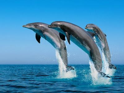 Tres delfines saltando sobre el mar   [26-6-20]