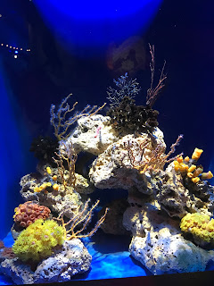 July Weekend Adventure - Oklahoma Aquarium