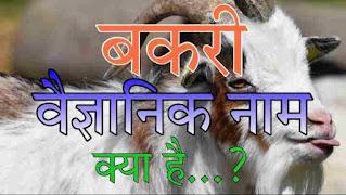 Scientific Name Of Goat 2021