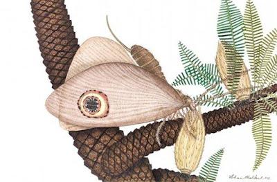 Fosil Kupu-Kupu Prasejarah Ditemukan di China