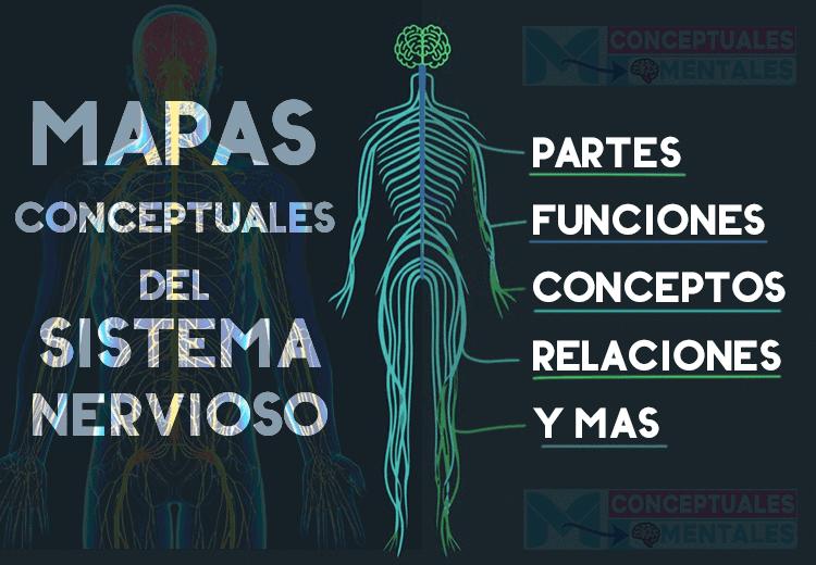 varias imágenes de mapas conceptuales sobre el sistema nervioso humano