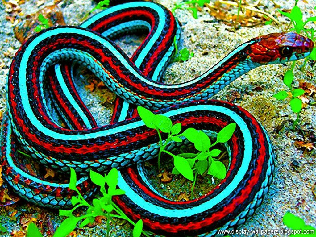King Snake Hd Pictures Fantastic Snake Wallpaper: Wallpapers Download: Snake Wallpapers HD