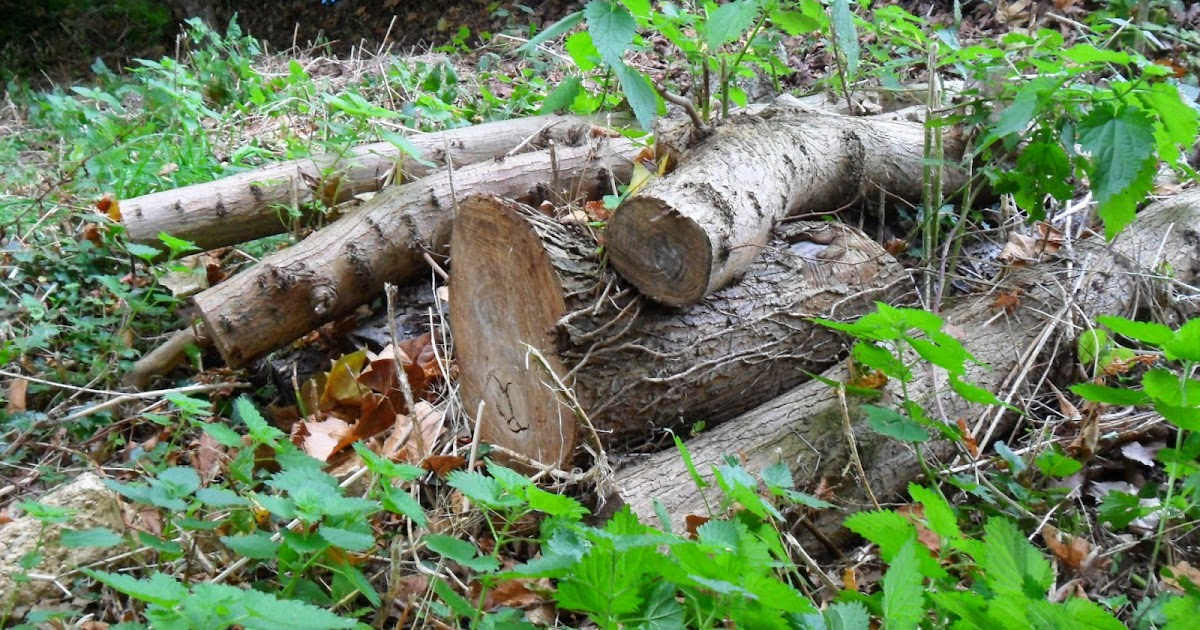 Worcester College Gardeners 2009 2018 Log Piles And A Bug