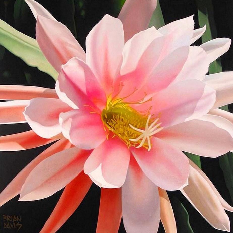 Cuadros modernos pinturas y dibujos arte flores ex ticas - Bimago cuadros modernos ...