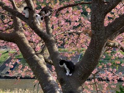 桜の枝に登った子猫