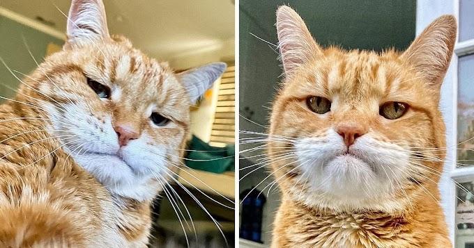 """Conheça Marley, o gato que nasceu com """"cara de segunda-feira"""""""