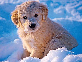 65f4926bafa3 Συμβουλές για να προστατέψουμε τα κατοικίδια μας από το τσουχτερό κρύο