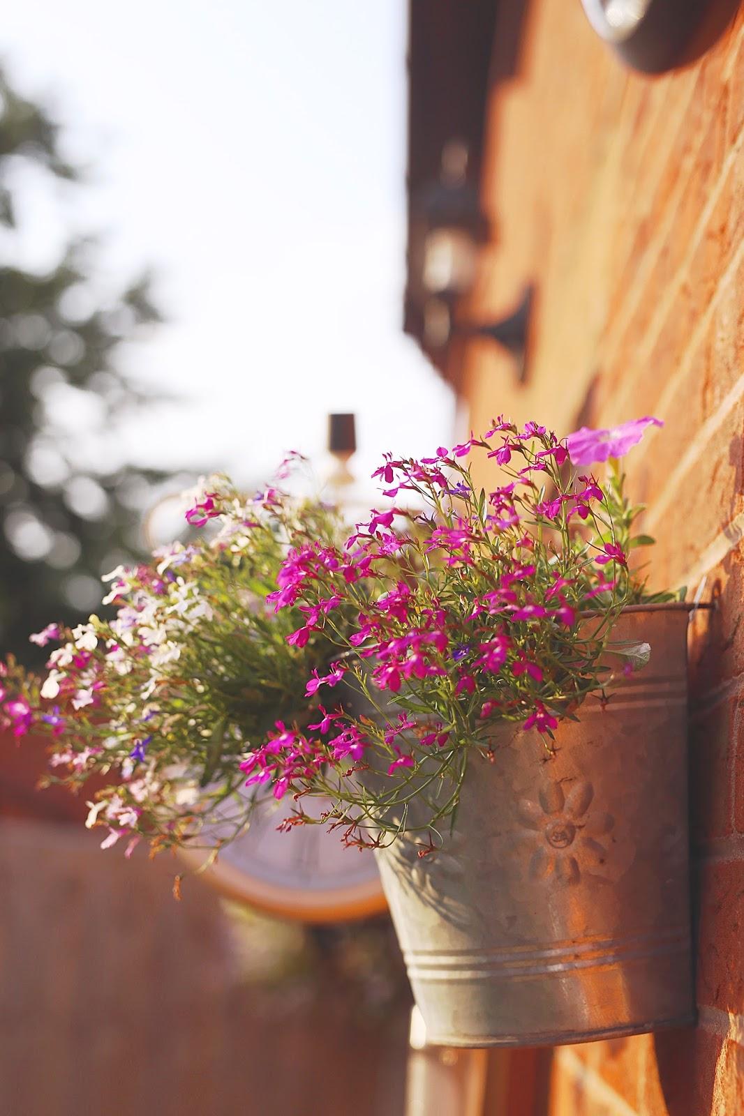 Hanging Basket, Flowers, Derbyshire Bloggers, Derbyshire Blogs, Katie Brown, Katie Writes,