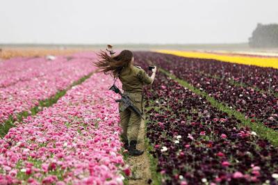 E Os Plantarei Na Sua Terra, e Não Serão Mais Arrancados Da Sua Terra Que Lhes Dei, Diz o Senhor, Teu Deus (Am 9.15).