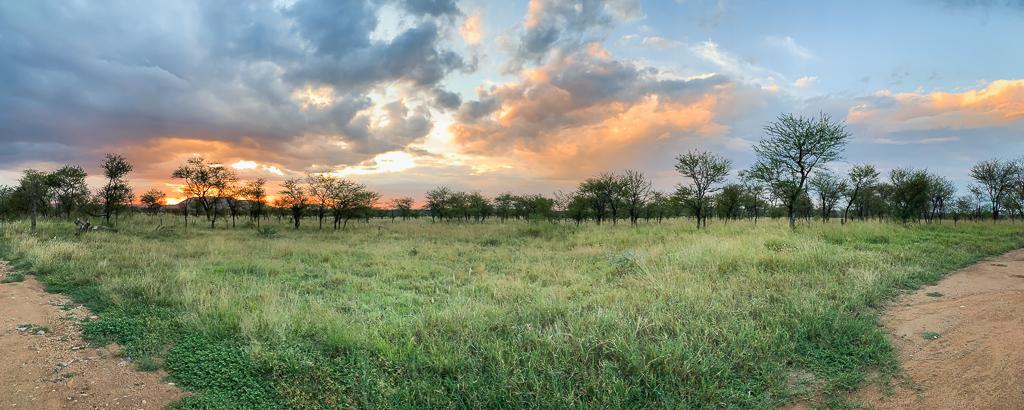 African Safari experience in Tanzania at the Serengeti National Park