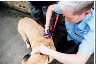 Найбільш важливою причиною, чому ваші домашні тварини повинні Pet страхування здоров'я