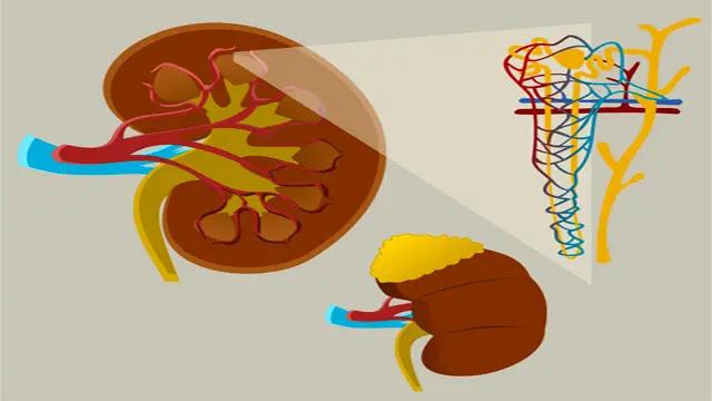 Glande surrénale : maladies