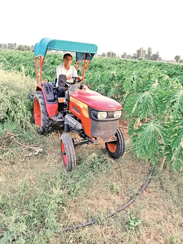 બનાસકાંઠાના ખેડૂતે પપૈયાંની ખેતીમાં 10 લાખ રૂપિયાની કમાણી કરી અન્ય ખેડૂતો માટે ઉદાહરણ બન્યા