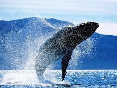 ¡Ballenas y delfines en Reikiavik! - Qué ver en Reikiavik