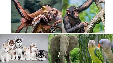 7 Hewan Terpintar Di Dunia, nomor 3 Mengejutkan !