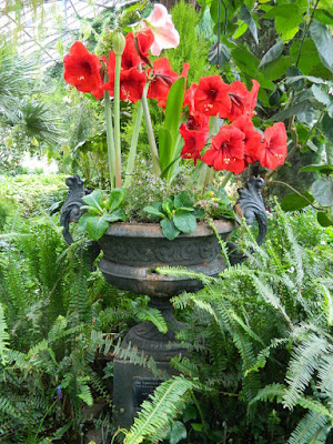 Spring container with Hippeastrum Amaryllis at the Allan Gardens Conservatory 2018 Spring Flower Show by garden muses-not another Toronto gardening blog