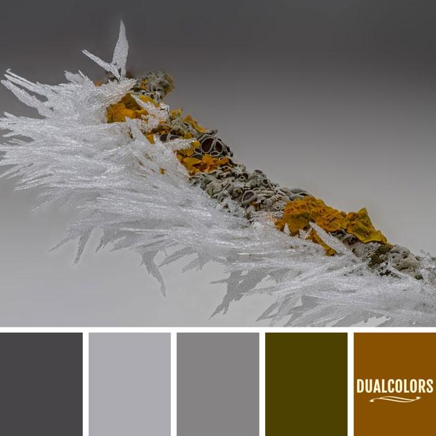 color_paleta_205
