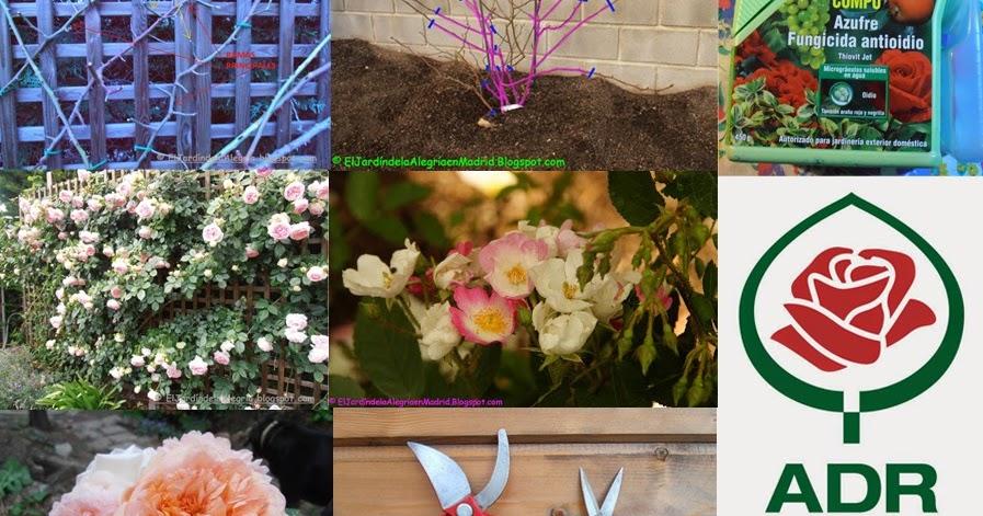 El jard n de la alegr a art culos sobre rosales for Articulos jardin