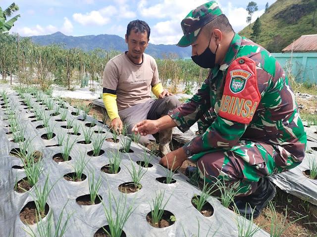 Babinsa Koramil 01/Kota Bantu Petani Bawang Merah Bersihkan Gulma