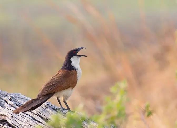Names of birds in Marathi